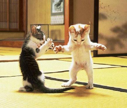 Danse de salon.....