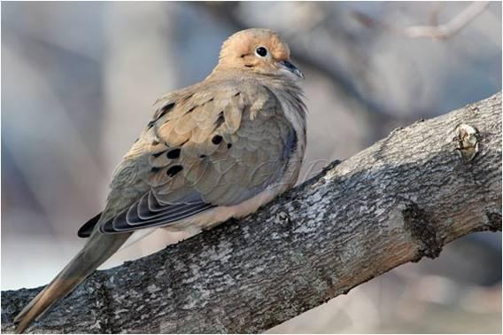 Les oiseaux toutes categories for Oiseau longue queue ventre jaune