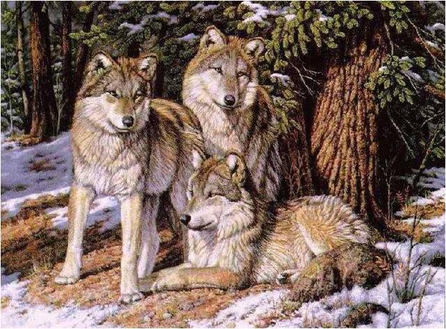 Les Loups 6