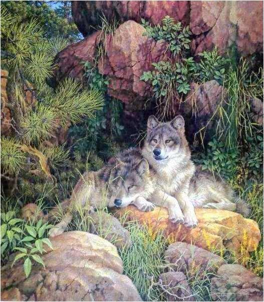 Les Loups 7